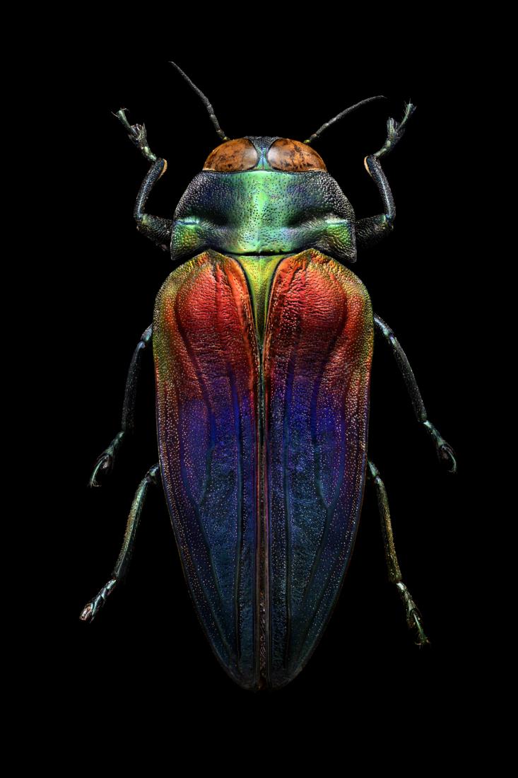 image6 17