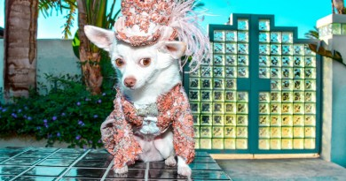 Canine Couture Designed by Anthony Rubio photo by Robert Fragoso 1