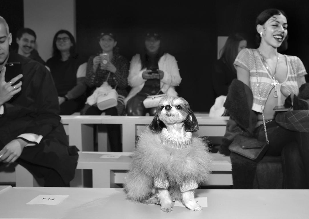 Tinkerbelle the dog @ Kim Shui NYFW FW2020 photo by Cheryl Gorski 25
